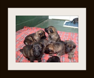 Rosie pups image