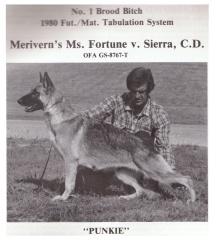 Meriverns Ms Fortune von Sierra no 1 brood bitch image