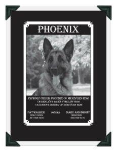 Phoenix GSDC Ad Page 1 image