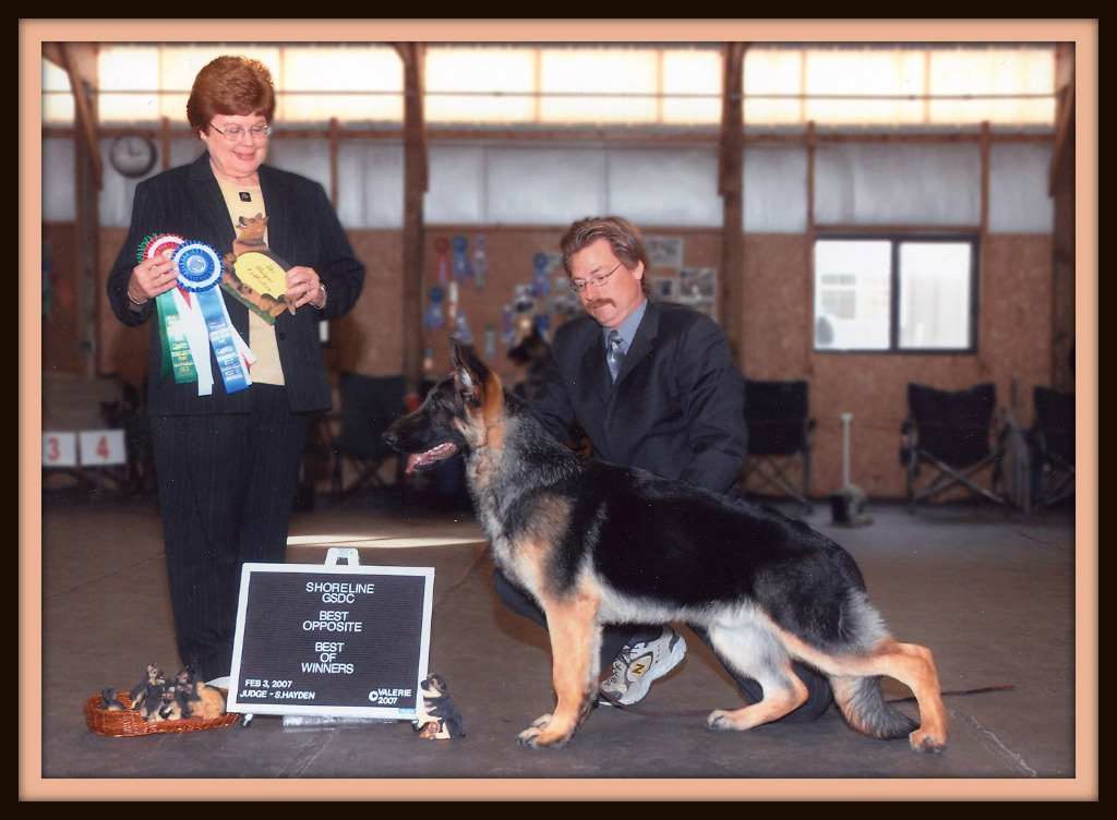 Wolf Creek Phoenix of Merivern Best Puppy image