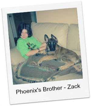 Bina and Izzys Dog Zack image