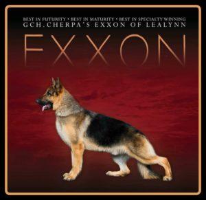 Grand Ch Cherpas Exxon of Lealynn image